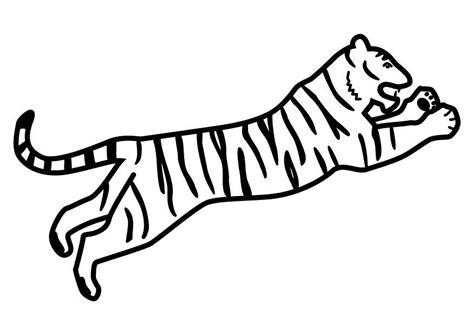 dibujo  colorear tigre saltando img  images