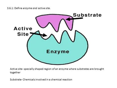 si鑒e d馭inition enzyme definition