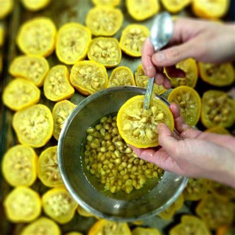fakta fakta menarik tentang jeruk yuzu di jepang