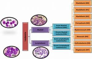 Major Types Of Leukemia  Aml