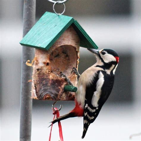 vogelfutter wie fettfutter und weichfutter selber machen
