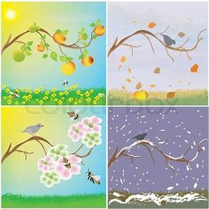 Four Seasonal Variation Of Apple Tree Branch