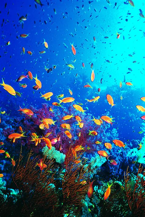 vibrant ocean ecosystems marine fish conservation network