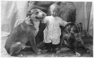 nanny dog myth revealed