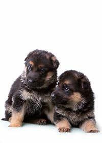 Animal Qui Commence Par U : nom de chien femelle nom chien femelle 2017 ~ Medecine-chirurgie-esthetiques.com Avis de Voitures