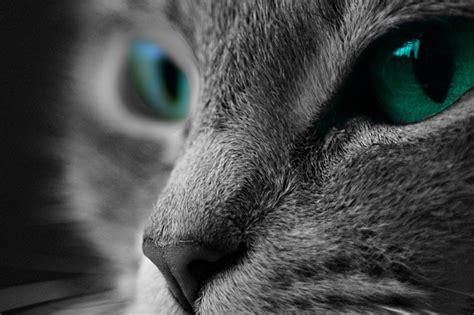 cat macro photography  photo  pixabay