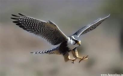 Hawks Wallpapers Hawk Px Wallpapersafari