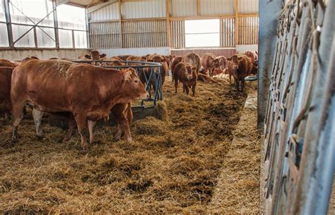 viande bovine des idées concrètes pour ses bâtiments