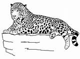 Coloring Animal Pages Animals Colouring Printable Cheetah sketch template