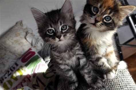 Cute Baby Cats Cool Stories And Photos