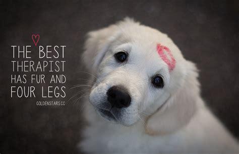 inspirational dog quotes  life  love playbarkrun