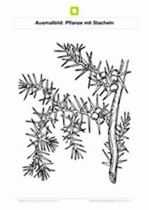 Pflanze Mit Stacheln : ausmalbilder blumen kostenlose ausmalbilder ~ Frokenaadalensverden.com Haus und Dekorationen