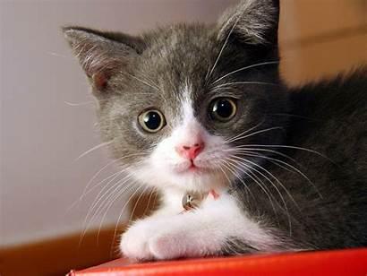 Cat Wallpapers Desktop Cats Background Breeds Cave