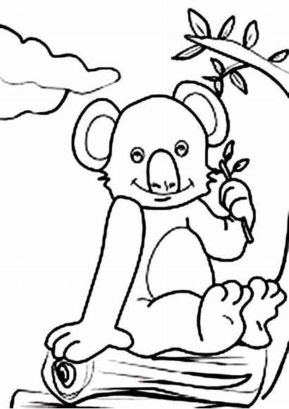 Koala Coloring Bear Sitting