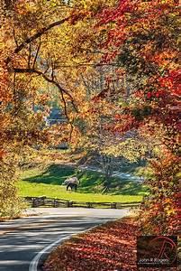 Autumn Leaves on the North Carolina back roads | Caballos ...