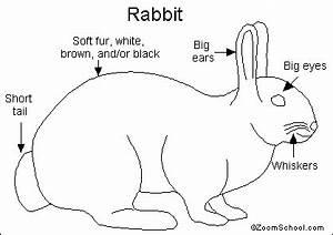 rabbit printout enchantedlearningcom With rabbitdiagram