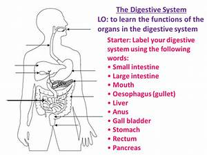 34 Label Diagram Of The Digestive System