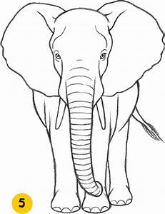 Elephant - Learn to Draw Animals [Book]
