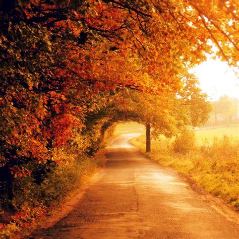 Hd Autumn Background by Free Hd Wallpaper صور عالية الجودة Autumn Hd