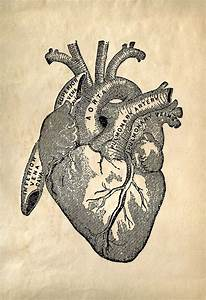 Anatomically Correct Heart From Grays Anatomy Txt