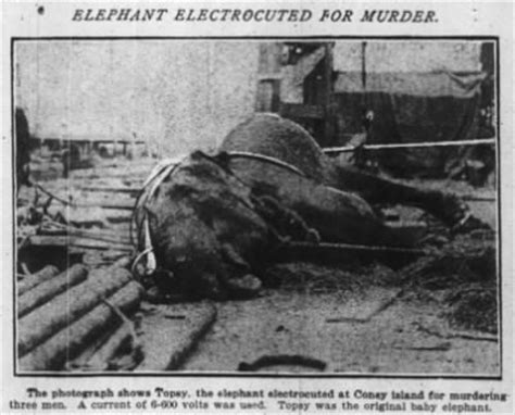 Edison Electric Chair by Bill Milhomme Topsy Edison Electrocuted An