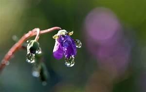 Water Drop On Flower wallpaper - 942473