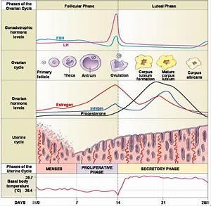 Human Reproduction  U00ab Kaiserscience