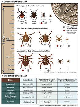 common ticks  fairfax county health