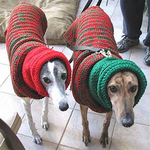 Adorable Dogs in Horrible Christmas Sweaters
