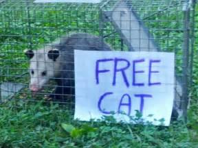 free cat free cat collegehumor post