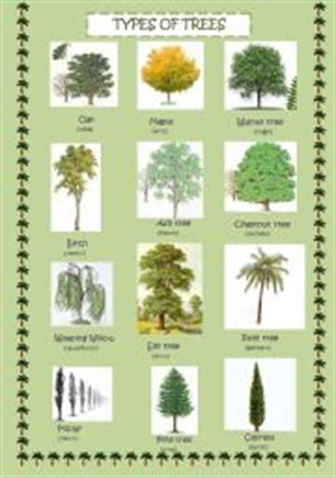 types  trees esl worksheet  neska