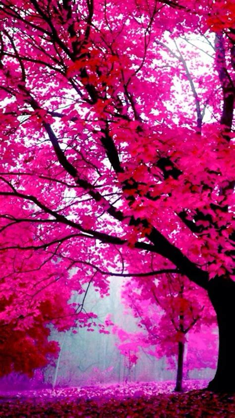 pink trees pink tree my style pinterest