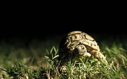 Turtle Iphone