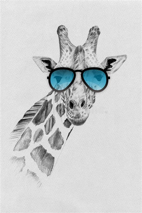 portrait  giraffe drawn  hand  pencil  sunglasses