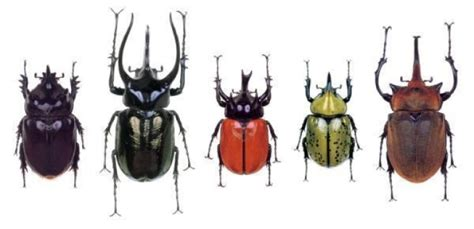 Will Beetles Inherit The Earth? Evolutionary Study Reveals