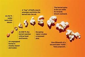 Diagram How Popcorn Pops