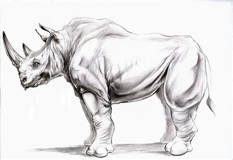 art  bryan thompson animal drawing rhino side view