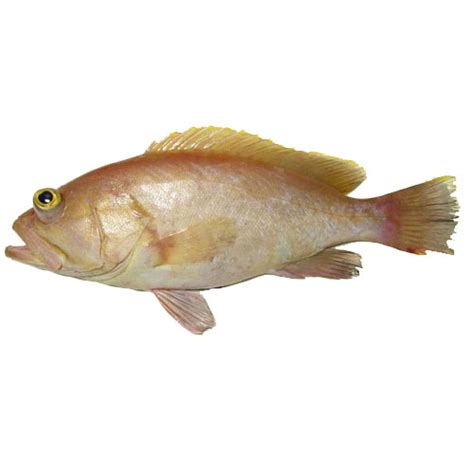grouper finfish yellow edge seafood lobster