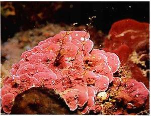The Inshore Zone - Reef Aquariums - gibell Aquarium Society