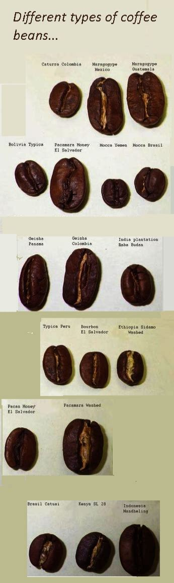 I like the service and the coffee and i visit it daily. Coffee Beans Locations Ground Coffee Shelf Life | Coffee ...