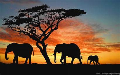 Bush Elephant African Sunset Wallpapers Nature Desktop