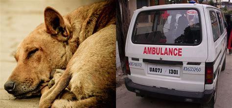 chandigarh starts  animal ambulance sets   india