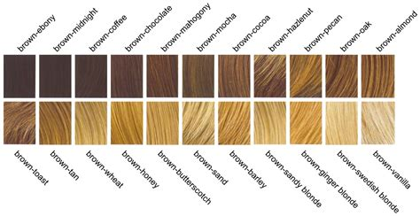different colors of brown genetics unit