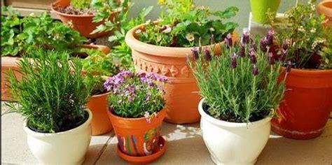 merawat tumbuhan hias  pot  ringan