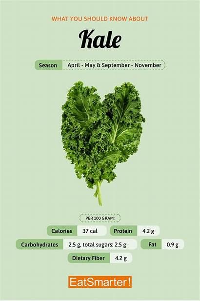 Kale Appreciated Ancient Roman Times Culinary Benefits