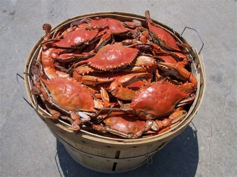 07653 Blue Crab Bay Discount Code by Steamed Crabs Maryland Blue Crabs