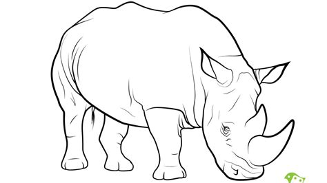 Rhino Coloring Pages - Costumepartyrun