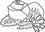 Cabbage Coloring Carrots Pages Vegetables Drawing Silhouettes Printable sketch template