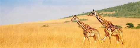 When to go on Safari - Safari destinations by month