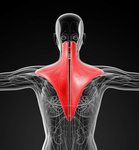 Trapezius Muscle Pain Points